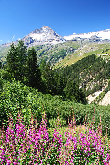 La Dent Parrachée, 3697 m d'altitude.