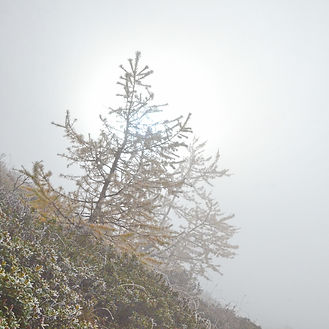 Brouillard givrant en montagne.
