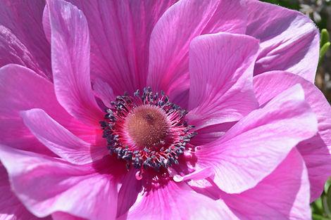 Fleurs de la terrasse.