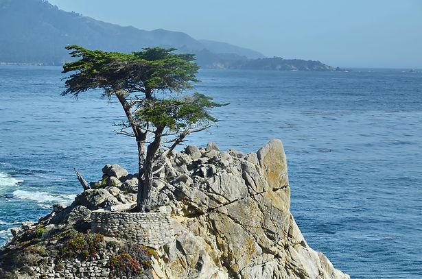 """""""Lone Cypress"""" Cyprès emblématique à Peeble Beach près de Carmel, Californie."""
