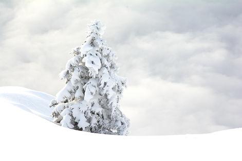 Solitude hivernale.