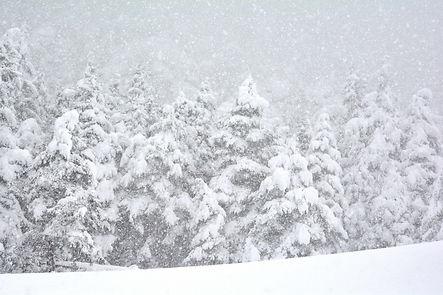 Silence et neige sur les forêts de Haute Maurienne.