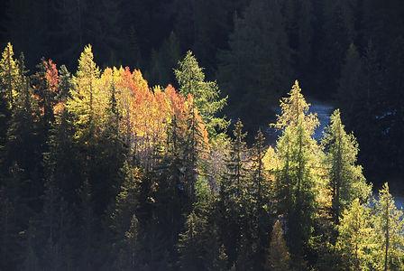 Rayon de soleil sur la forêt en Haute Maurienne.