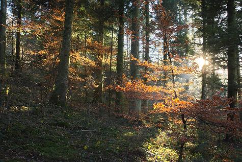 Sous bois d'automne.
