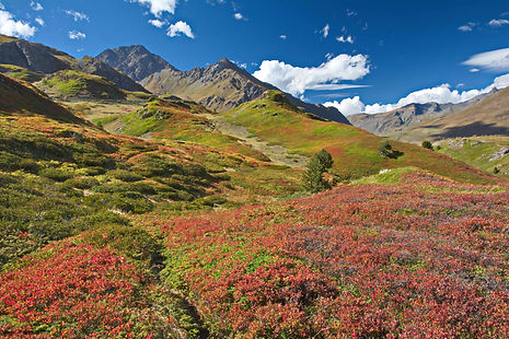 Couleurs d'automne sur le plateau du Mont Cenis en Haute Maurienne.