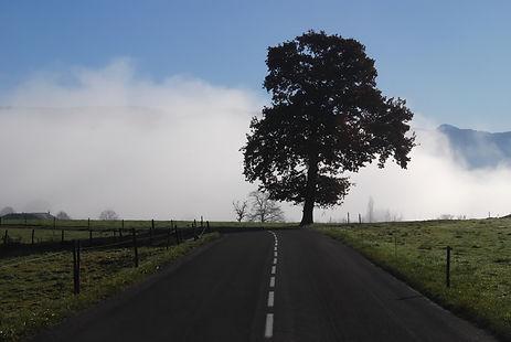 Dressé à la croisée des chemins, ce vieux chêne semble monter la garde.