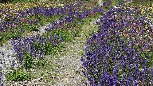Chemin fleuri en Haute Maurienne.