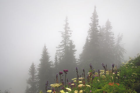 Brouillard d'été.