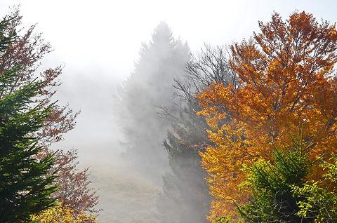 Brouillard d'automne au Revard.