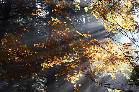 Rayons de soleil sur la forêt.