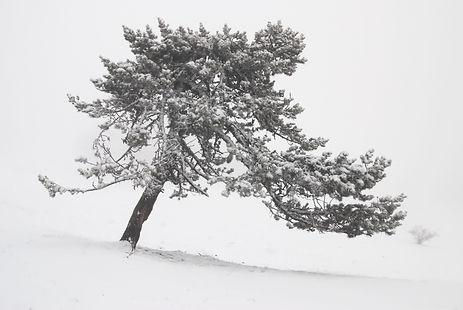 Perdu dans le silence et le froid du plateau de Retord.