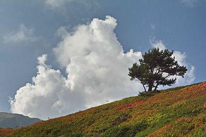 Solitaire sur le plateau du Mont Cenis.