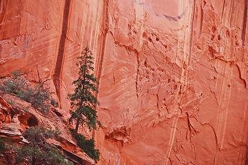 """A l'intérieur de""""Long Canyon""""."""