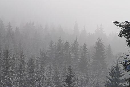 Brouillard sur la forêt.