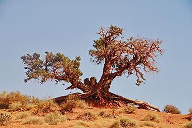 La rage de vivre à Monument Valley, Arizona.