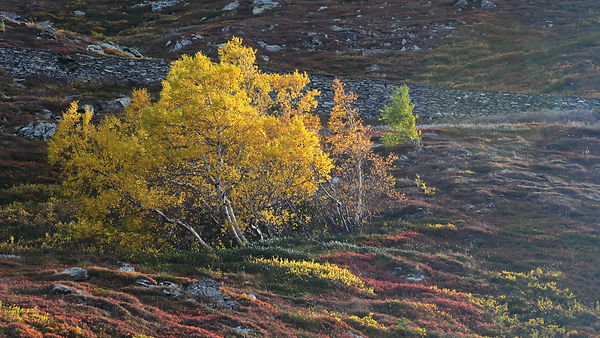 Couleurs d'automne au Mont Cenis.