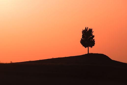 Solitaire, en Toscane au soleil couchant.