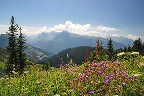 Sur les hauteurs de Morillon en Haute Savoie face au massif des Aravis.