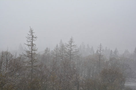 En Haute Maurienne, neige sur la forêt.