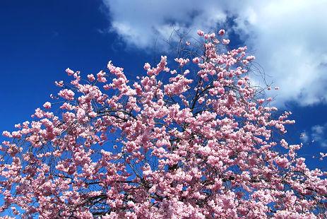 Merveilleuses couleurs du printemps sur les arbres.