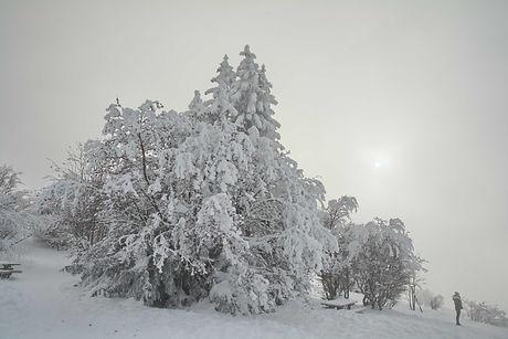 Hivernale rêverie au au Revard en Savoie.