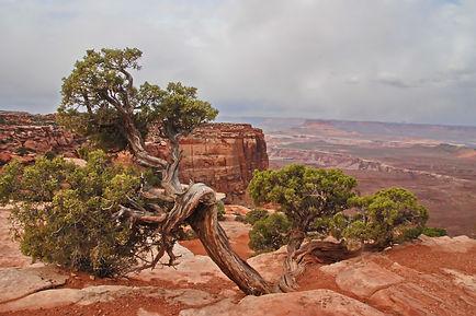 Canyonlands, la rage de vivre.