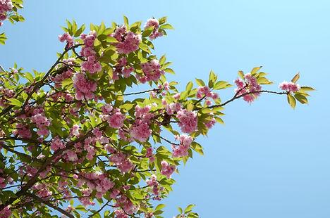 Après la grisaille de l'hiver voilà le réveil du printemps.