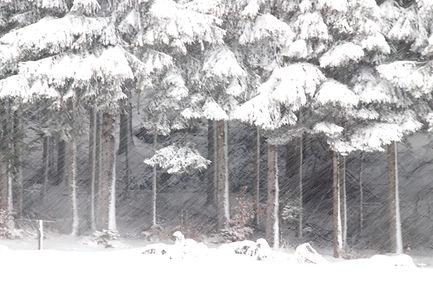 Il neige sur la forêt.