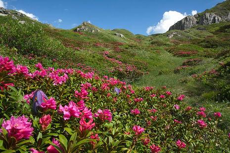 Couleurs du printemps au Mont Cenis.