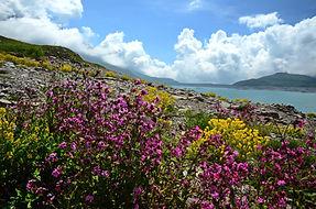 Printemps sur les rives du lac de Mont Cenis en Haute Maurienne.