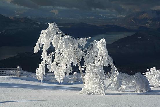 Courbé sous le poids du givre et de la neige ce bouleau semble veiller sur la vallée.