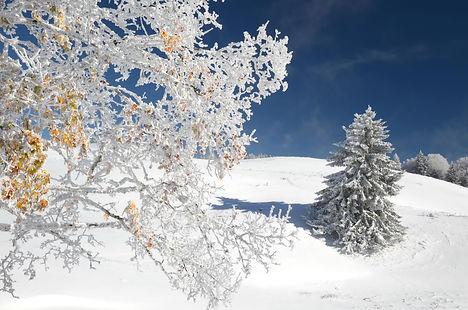 C'est le début de l'hiver sur le plateau du Revard en Savoie.