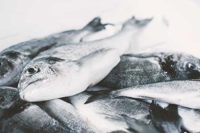 pesce-baba-beach-alassio.jpg