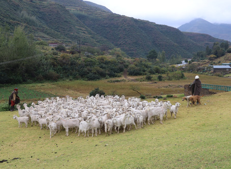 A trip to Lesotho