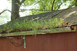 Accidental gutter garden - clean your gutters before getting this overgrown.