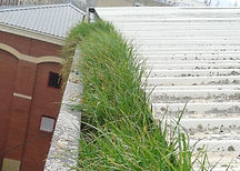 Grass growing in roof gutter