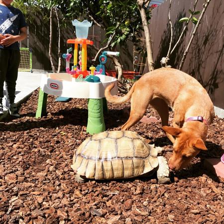 Aloo meets BG the tortoise