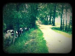 Les Vaches voisines  Cabane du Lamas