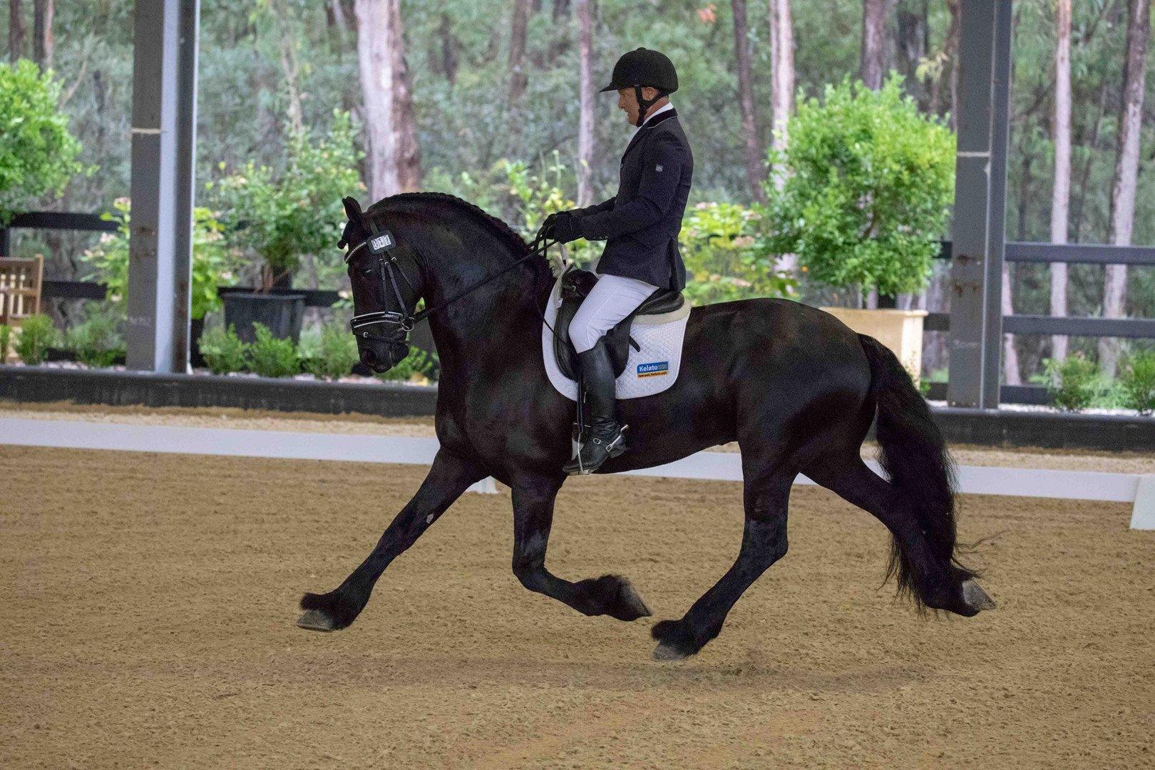 Bastiaan 510 under saddle