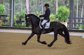 Bastiaan 510 under saddle
