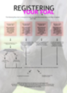 foal registration flow chart.jpg