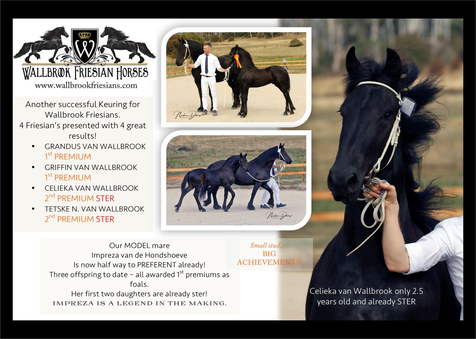 Wallbrook Friesian Horses