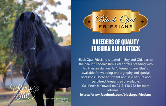 Black Opal Friesians