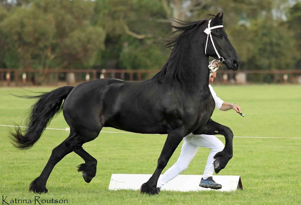 Fraukje T Crown mare