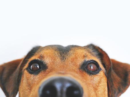 熱浪來襲,該如何預防狗狗中暑?