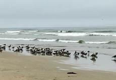Families Beachgoers Kids, Protect Oceano Dunes Beach, San Luis Obispo County California 3