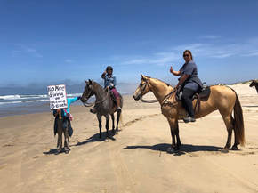 Horses & signs.jpg