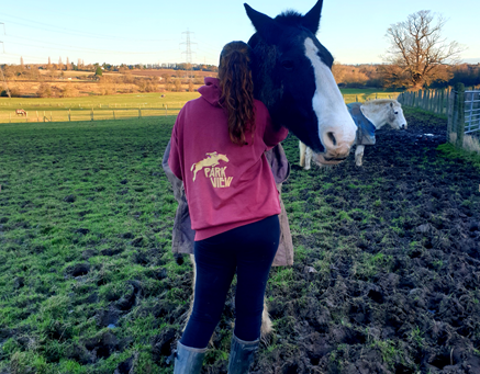 Spend time with horses and soothe your anxiety.