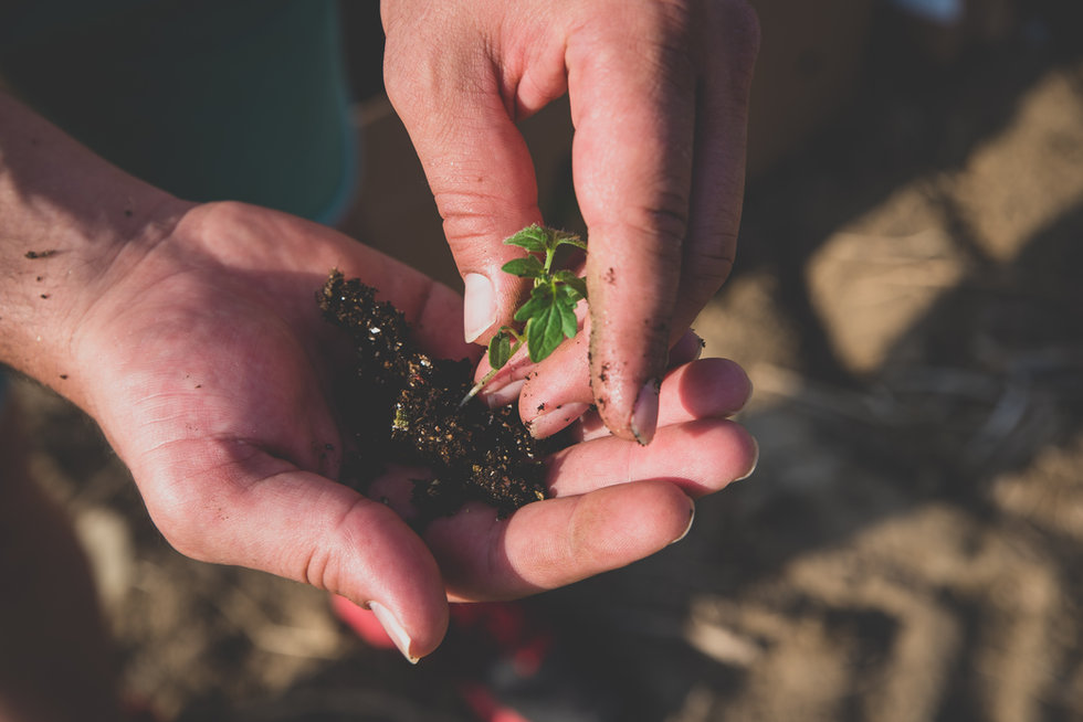 hands-holding-soil-and-plant-UAW7V8S.jpg