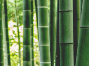 10 Things You Didn't Know About Bamboo